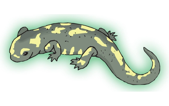 green_salamander